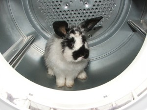 Remember! Rabbits need strokes, not washing.