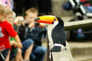 If toucan, I can, we can, you can!