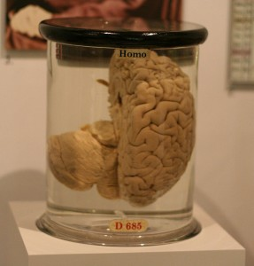 Where do you keep your brain at work?