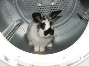 Remember! Rabbits need strokes, not washing.